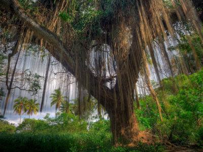 бородатое дерево