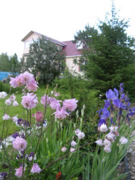 многолетние цветы-компаньоны ириса