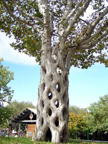 дерево с ажурным стволом