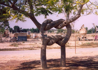 необычные деревья: дерево-узел