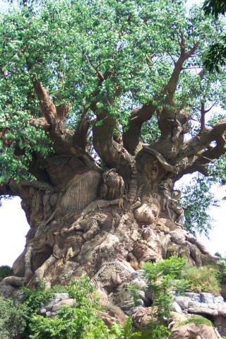 пробковое дерево с узорами
