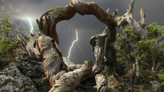 дерево с закрученным стволом