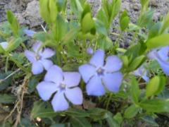 Названия неприхотливых садовых многолетних цветов: создаём участок на